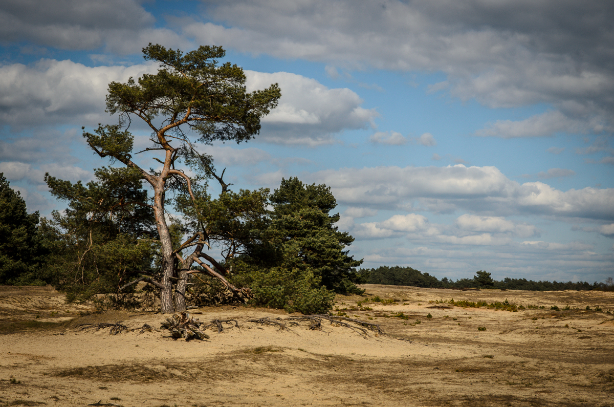Hoge Veluwe National Park, The Netherlands